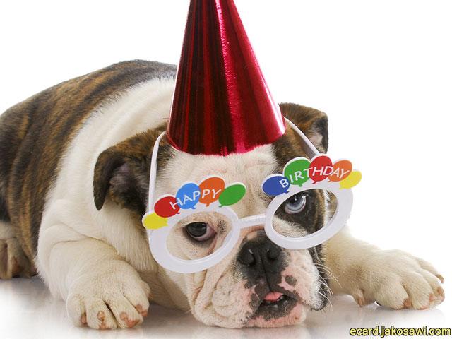 Bulldog Eating Cake